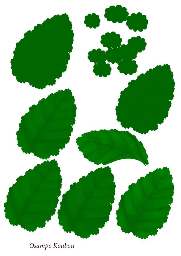 サクラソウの葉描き方2ss