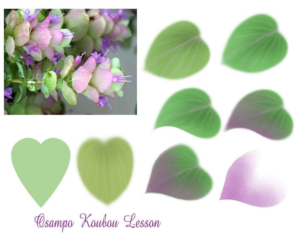 オレガノケントビューテーの葉の描き方1