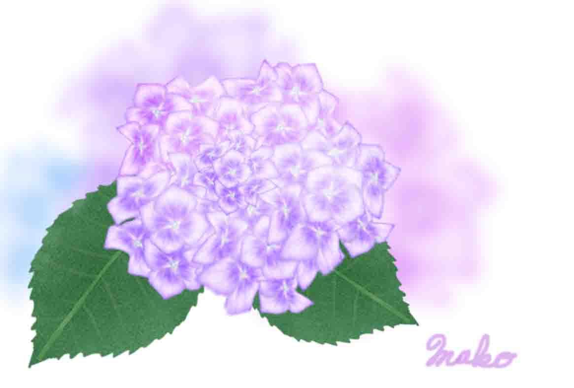 長澤さんアジサイ花小花ー2